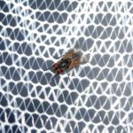moskitiery malbork